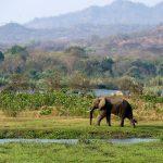 Malawi - nadějná příští safari destinace 4