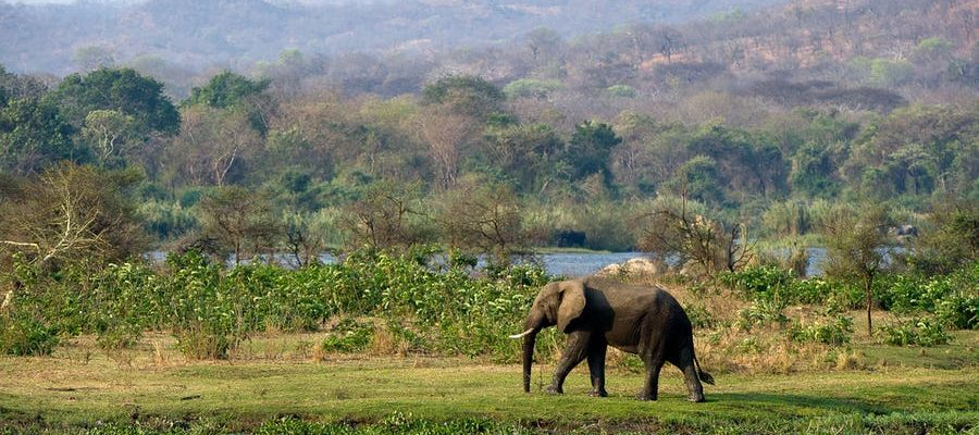 Malawi - nadějná příští safari destinace 1