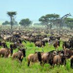 Velká migrace divokých zvířat v Tanzanii 2