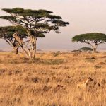 Hlavní důvody, proč navštívit Zambii 3