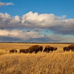 Proč miliardáři skupují pozemky ve vnitrozemí? 4