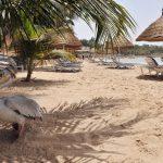 Co dělat v Senegalu 5