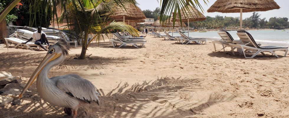 Co dělat v Senegalu 1