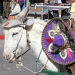Úžasné a bizarní mexické slavnosti 5