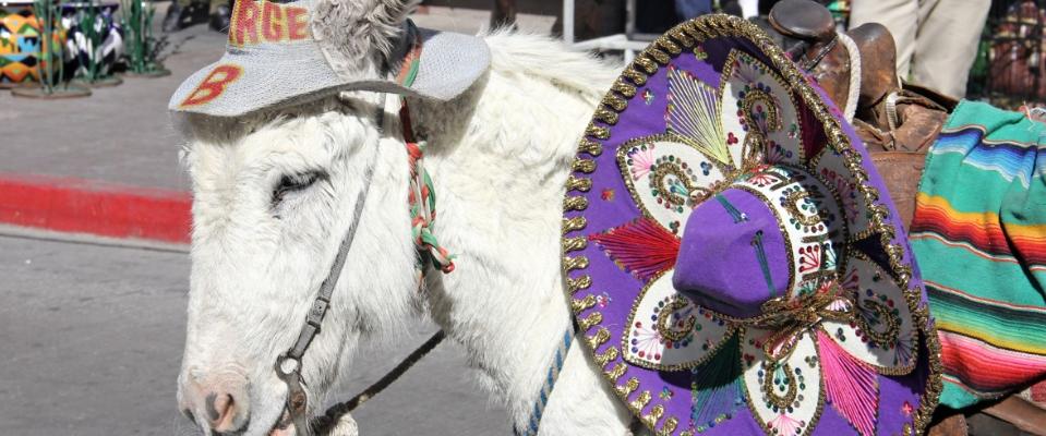 Úžasné a bizarní mexické slavnosti 1