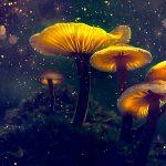 Psilocybin a OCD: mohou psychedelika léčit obsedantně kompulzivní poruchu? 2