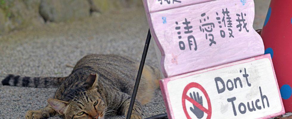 Kočičí vesnice Houtong na Taiwanu 1