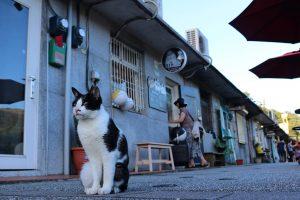 Kočičí vesnice Houtong na Taiwanu 2