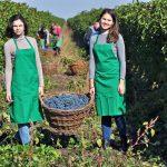 Za vínem do Moldavska 2
