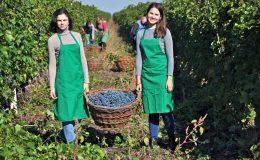 Za vínem do Moldavska 5