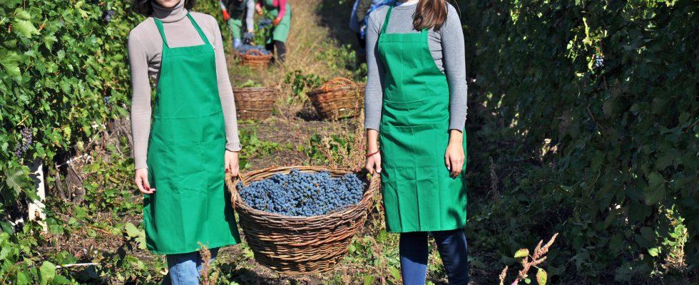 Za vínem do Moldavska 1