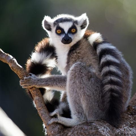 10 důvodů pro návštěvu Madagaskaru 2