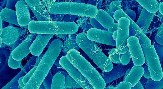 Revmatoidní artritida spojená s nerovnováhou střevních bakterií 6