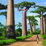 10 důvodů pro návštěvu Madagaskaru 7