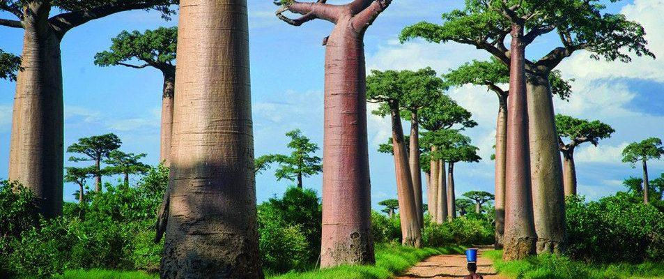 10 důvodů pro návštěvu Madagaskaru 1