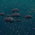 Vzorky aerosolu nad oceánem odhalily mikroplasty šířené větrem 2