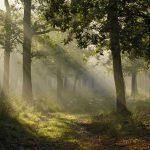 Vědci dnes připouští, že stromy spolu komunikují prostřednictvím prastaré komunikační sítě 5