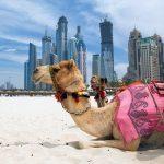Hlavní turistické atrakce Spojených arabských emirátů 3