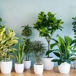 Pokojové rostliny: lockdown vyvolal nový trend 6