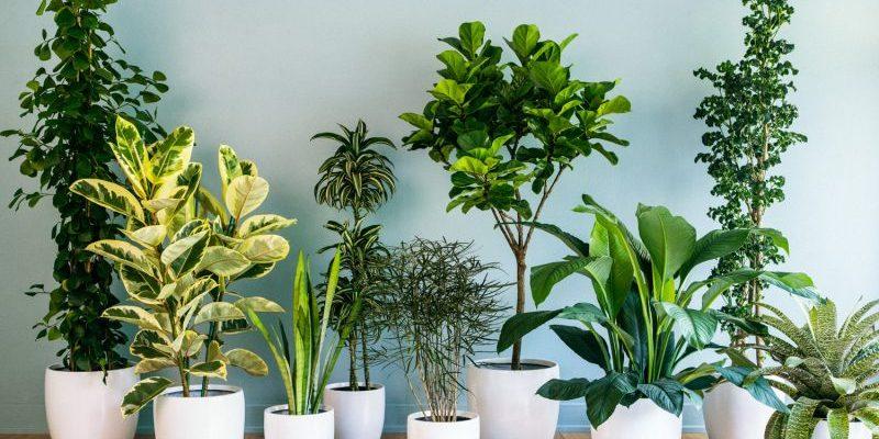 Pokojové rostliny: lockdown vyvolal nový trend 1