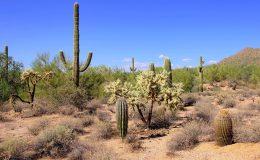 Přírodní parky a monumenty Arizony 33