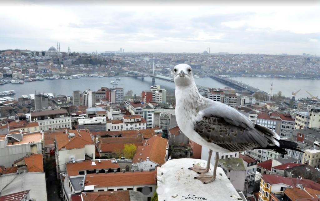 Hlavní turistické atrakce Istanbulu, hotely a výlety 3