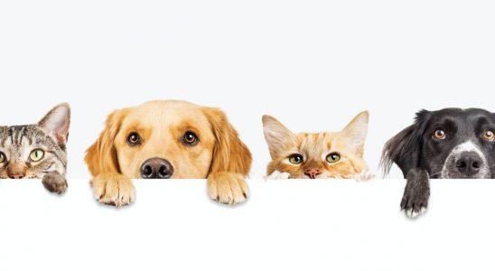 Proč kočky a psi mohou potřebovat své vlastní vakcíny proti covid-19 1