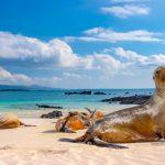 Poprvé na Galapágách 38