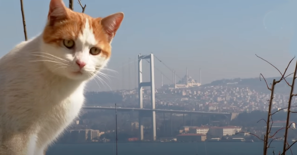 Istanbulské fotky, které vám popletou hlavu 2