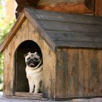Jak vyrobit psí boudu 6