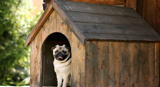 Jak vyrobit psí boudu 2